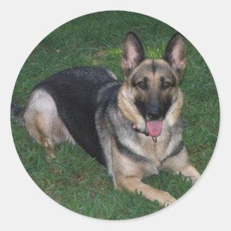 Adesivo German shepherd