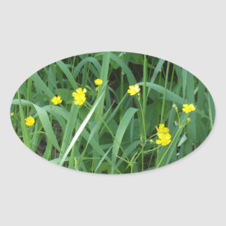 Adesivo Oval Botões de ouro amarelos bonito
