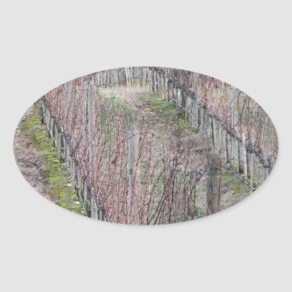 Adesivo Oval Campo desencapado do vinhedo no inverno. Toscânia,