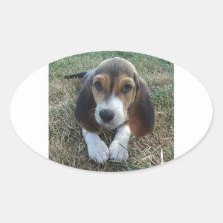 Adesivo Oval Cão de filhote de cachorro de Artésien Normand do