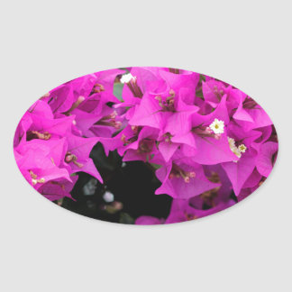 Adesivo Oval Fundo fúcsia roxo do Bougainvillea