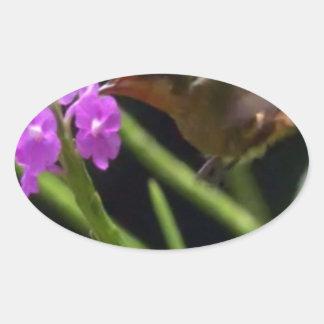 Adesivo Oval Pássaro do zumbido sobre os colibris bonitos 99 da