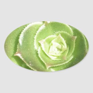 Adesivo Oval Succulent verde