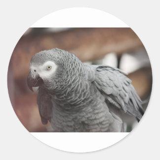 Adesivo Papagaio
