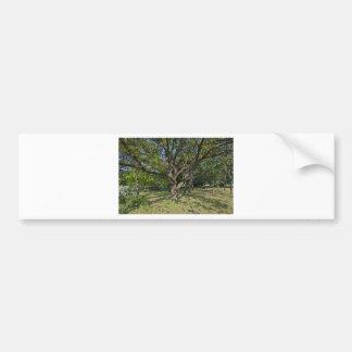 Adesivo Para Carro Árvore na primavera