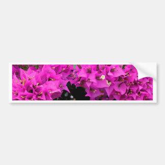 Adesivo Para Carro Fundo fúcsia roxo do Bougainvillea