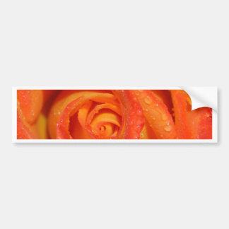 Adesivo Para Carro Laranja cor-de-rosa da flor fotografada por Tutti