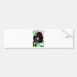 Adesivo Para Carro Macro preto da tulipa