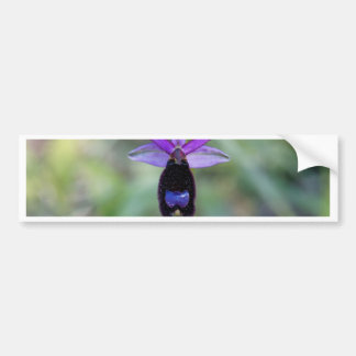 Adesivo Para Carro Orquídea de abelha de Bertolonis (bertolonii do