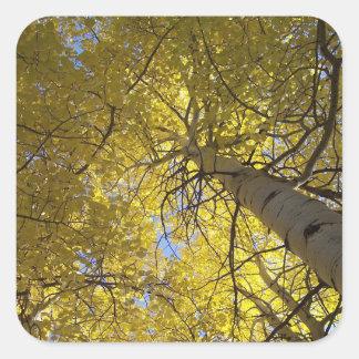 Adesivo Quadrado Árvores de Aspen e céus azuis
