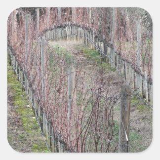 Adesivo Quadrado Campo desencapado do vinhedo no inverno. Toscânia,