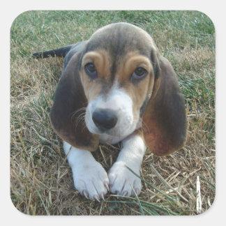 Adesivo Quadrado Cão de filhote de cachorro de Artésien Normand do