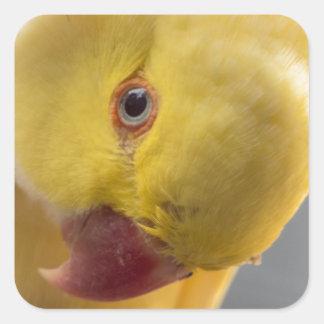 Adesivo Quadrado Companheiro amarelo