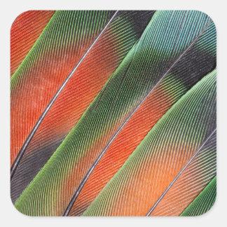 Adesivo Quadrado Design da pena de cauda do Lovebird