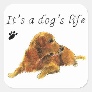 Adesivo Quadrado É slogan da arte do cão do golden retriever da