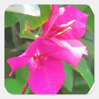 Adesivo Quadrado Emblema floral do bougainvillea da flor do viagem