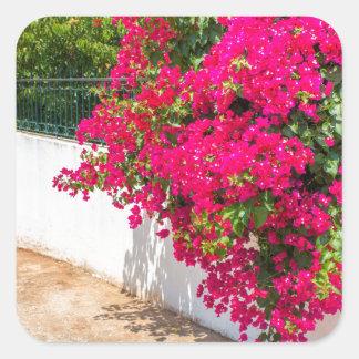 Adesivo Quadrado Flores vermelhas de bougainville que florescem em