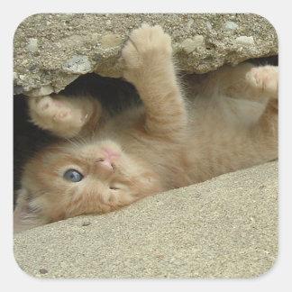 Adesivo Quadrado Gatinho alaranjado do gato malhado do super-herói