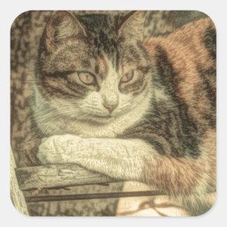 Adesivo Quadrado Gato de chita rústico da casa da quinta do amante