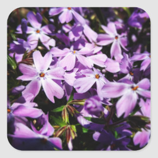 Adesivo Quadrado O remendo roxo da flor