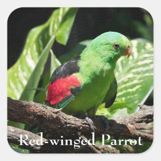 Adesivo Quadrado papagaio Vermelho-voado no membro de árvore