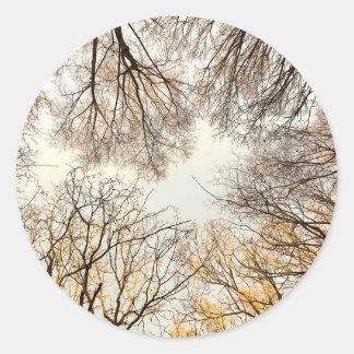 Adesivo Ramos de árvore desencapados