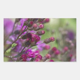 Adesivo Retangular Botões gigantes roxos do Wildflower do Ironweed
