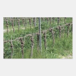 Adesivo Retangular Campo desencapado do vinhedo no inverno. Toscânia,