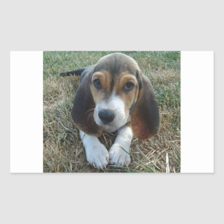 Adesivo Retangular Cão de filhote de cachorro de Artésien Normand do