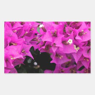 Adesivo Retangular Fundo fúcsia roxo do Bougainvillea