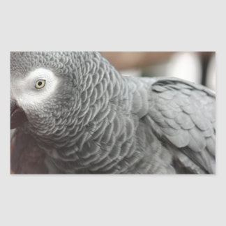 Adesivo Retangular Papagaio