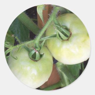 Adesivo Tomates verdes