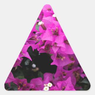 Adesivo Triangular Fundo fúcsia roxo do Bougainvillea