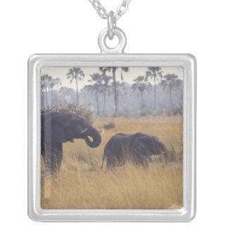 ÁFRICA, Botswana, elefante africano Colar Banhado A Prata