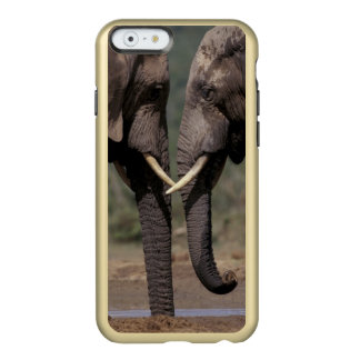 África do Sul, Kalahari-Gemsbok NP, Gemsbok em Capa Incipio Feather® Shine Para iPhone 6