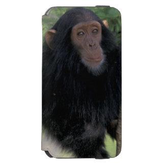 África, East Africa, Tanzânia, criança de Gombe NP Capa Carteira Incipio Watson™ Para iPhone 6