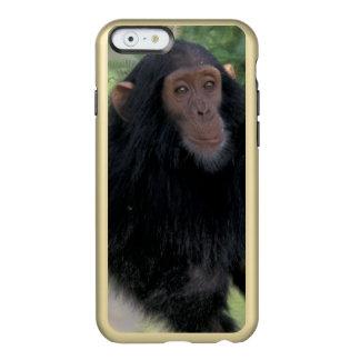 África, East Africa, Tanzânia, criança de Gombe NP Capa Incipio Feather® Shine Para iPhone 6