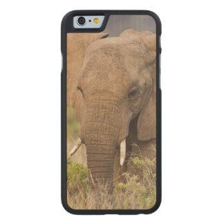 África. Kenya. Elefante em Samburu NP