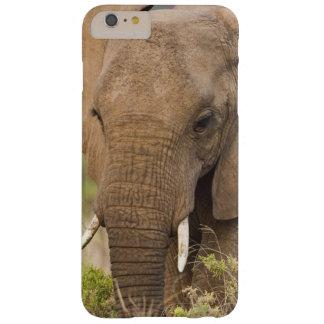 África. Kenya. Elefante em Samburu NP Capas iPhone 6 Plus Barely There