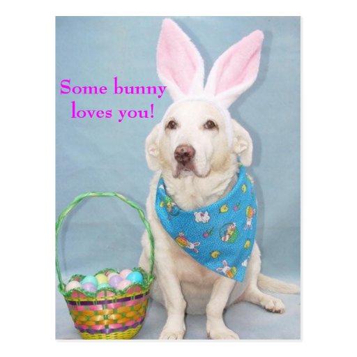 Algum coelho ama-o! cartao postal