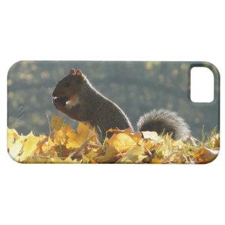 Alimentação do esquilo capa barely there para iPhone 5
