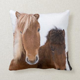 Almofada Cavalos islandêses bonitos junto