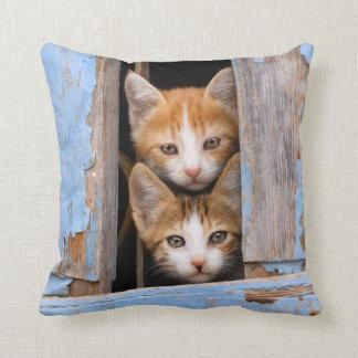 Almofada Gatinhos bonitos em uma janela do vintage,