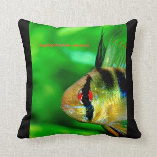 Almofada Ram Cichlid , Papiliochromis ramirezi