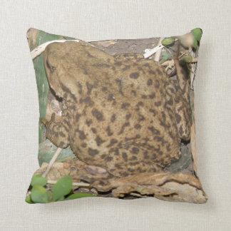 Almofada Travesseiro comum do sapo do europeu