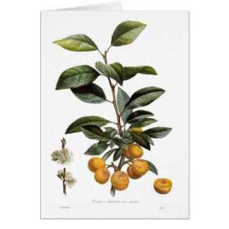 Ameixa do mirabelle (syriaca das variedades do cartão comemorativo