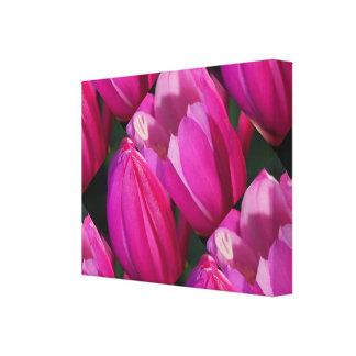AMIGO cor-de-rosa sensual do BOTÃO: Estilo da