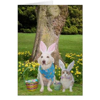 Amor de alguns coelhos você! cartão comemorativo