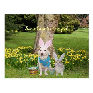 Amor de alguns coelhos você! cartão postal