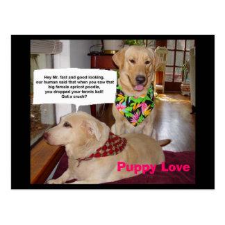 Amor de filhote de cachorro cartão postal